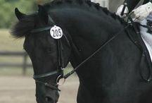 Horses: an Equine Affair 1E Closed