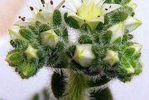 Kaktusy a sukulenty