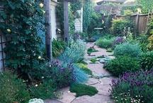 Secret Garden/Lawn / Ideas for lawn and garden that I like. / by Melanie Berner