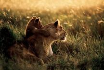 Safari Nursery / by Claire Aubel