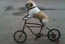 Bike / #vádebike