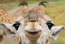 elephants & giraffes. / by Beckie O'Beckie