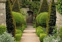 Garden & Landscape / by Teresa Stewart Williams