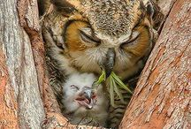 How Many Licks.....? / Anything and everything OWLS! / by Lisa Benson Dotson