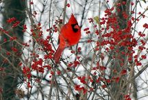 Wonderful Winter / by Pam O'Connell