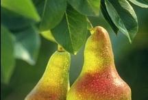 I Heart Pears / Pears