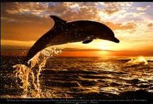 DOLPHINS AND WHALES / by Debi Faulkner-Ouellette