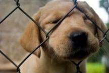 So cute it hurts! / by Ashley West