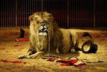 LEO-The Lion / by Lisa Hollingsworth
