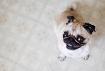 Pug Lovin