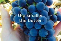 My #Steller stories / View beautiful photo stories about food, wine and Sicily
