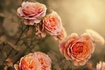 Flowers / by Salon Simis