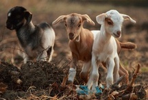 Animals / by Shannon Krelle