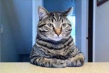 Kitty Kitty / A Page Full of Fabulous Felines!