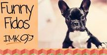 Funny Fido's / Funny picture's, stories, quotes, and videos of dogs.