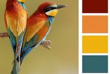 Colour Palette / Colour