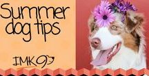 Summer Tips For Dogs / Awesome TIPS for protecting and caring for your dogs during the summer!  Tons of great ideas and summer products as well!
