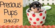 Precious Pups / Meaningfull quotes and pictures of dogs.