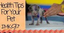 Health Tips for Your Pets / Health Tips to keep your dogs and cats fit, healthy and happy!