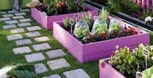 Garden / Garden, Gardening