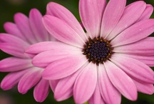 Pink / by Donna W
