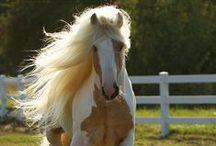 Horses and Cowboys