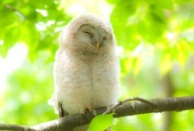 owls / hoot *