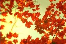 Fall ♥ / saison favori *