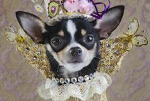 Canine Couture / Fabulous Fashions for Furbabies