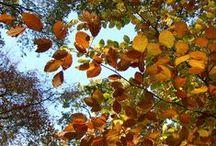 Autumn / leaves, colours, autumnal inspiration, celebrations