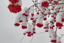 Winter wonders / by Heather