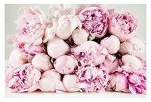 Flowers / Flowers, Flowers, Flowers