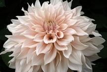 Pretty Flowers / by Irma Martinez