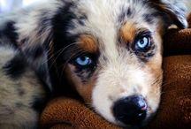 Cute And Cuddly / by Terra Davis