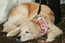 Animal Weddings Friends