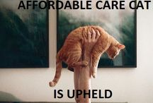 Health Insurance / by Lisa Meowrie