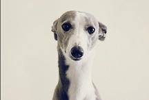 Must love dogs / by Jenny Adkins