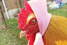 Cluckin' Chicken / by Nina Vail