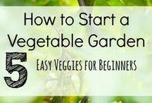 Gardening 101 / by Stacy Paprocki