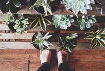 Leafy Life