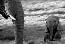 aw elephants!