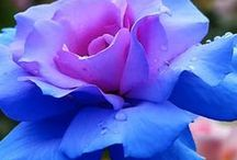 Flowers by Shop Fruit Baskets, Mother, Valentine, http://shopfruitbaskets.com/ / Flowers at Shop Fruit Baskets. Photos and flower gifts for Mother's day or Valentine's. http://shopfruitbaskets.com/mothers-day-flowers.htm