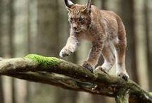 Animals and Photography / Animals, Animal Photography