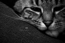 cats / Le meilleur ami ..