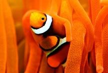 Swimming Creatures