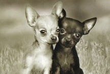 Cute Animals  / by Rhonda Burris
