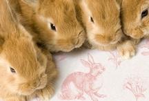 Bunny love love love!