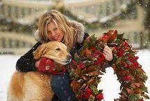 Seasons | Winter / Snowyfrost