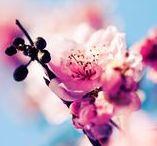 Seasons | Spring / Springthings