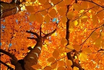 Glorious Fall  / by CM Reith